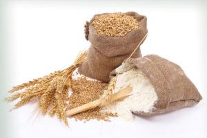 wheat grains and wheat flour
